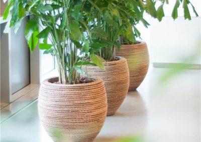 Interieurbeplanting_2