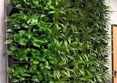 Groene_plantenwand_2