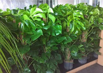 Plantenvoorraad-Waddinxveen