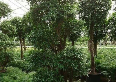 Kwekerij-hydrocultuur-De-Kwakel